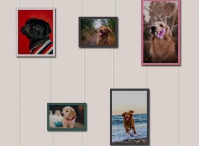 网页布局代码CSS3设计创意个性的照片图像展示效果