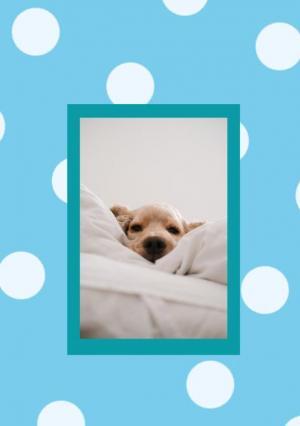 H5图片特效代码CSS3选择器布局设计小狗图像鼠标滑过图片特效展示效果